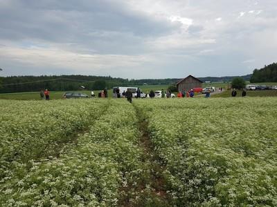 Pellonpiennartilaisuus Nousiaisissa 16.6.