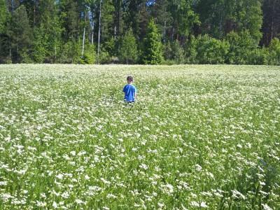 Satokuminat kukassa ja kylvöt valmiina