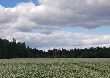 Huomioi kasvinsuojeluaineiden ruiskutusajat ja  varoajat satovuoden lohkoilla